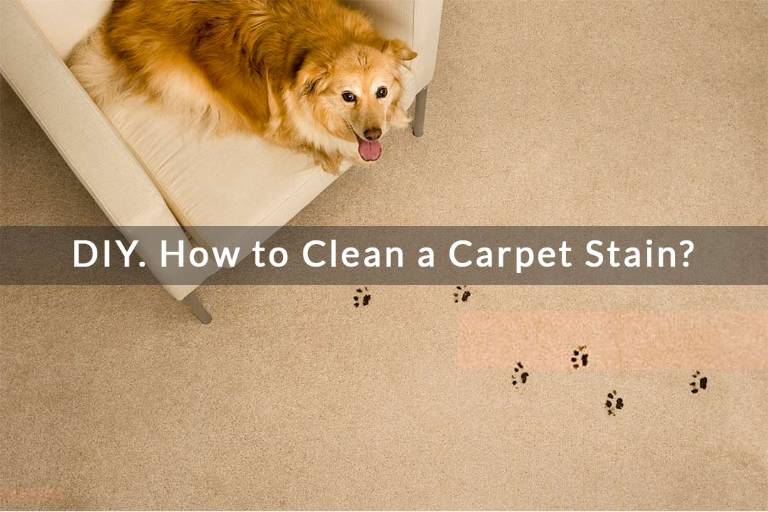 DIY. How to Clean a Carpet Stain?